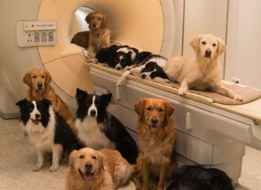National Academies Affirms Scientific Necessity of VA Canine Research