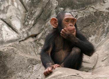 Future Vaccine Development Relies on Primates in Short Supply