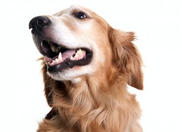 USDA Confirmed COVID-19 in Dog