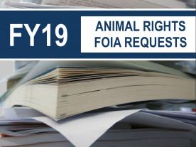 FY2019 FOIA Report