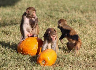 Primate Info Net Has Returned!