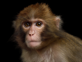 Neuralink Monkey Plays MindPong Telepathically